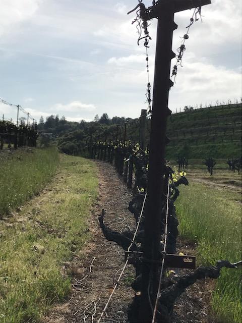 Alto Vineyards Sangiovese